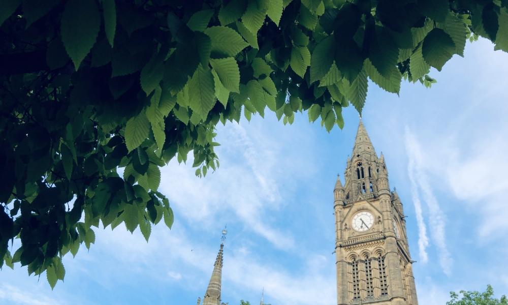 DM Town Hall Foliage